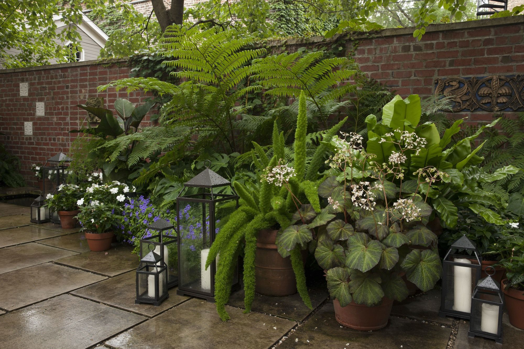 A glorious assortment of tropical ferns have turned my yard into my personal paradise. Here an Australian tree fern stands above container plantings of foxtail and bird's nest ferns and rex begonias. Image courtesy of Jayson DeGeeter.