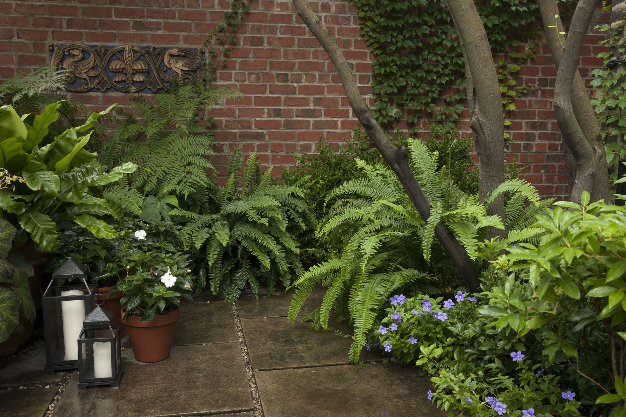 Layers of potted tropicals, impatience and philodendrons add color, texture and depth to the yard. Image courtesy of Jayson DeGeeter.